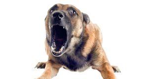 seguridad perro