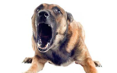 El perro y los sistemas de seguridad